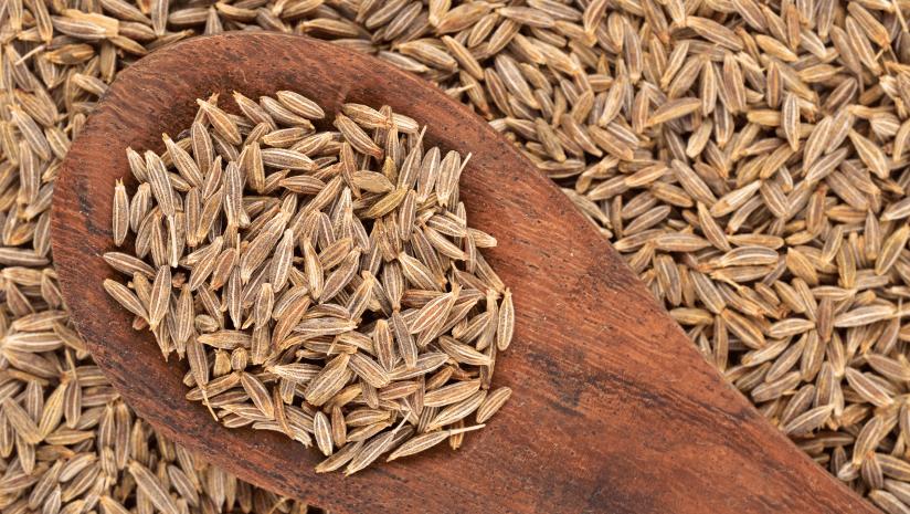 cumin seeds India